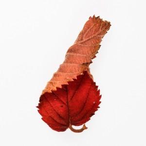 2015-Herbsblätter-3_0154-bq-hp