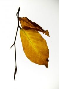 2015-Herbstblätter_0059-b-hp