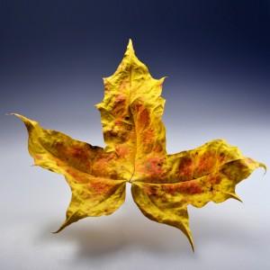 2015-Herbstlaub-2_0011aq-frei hp